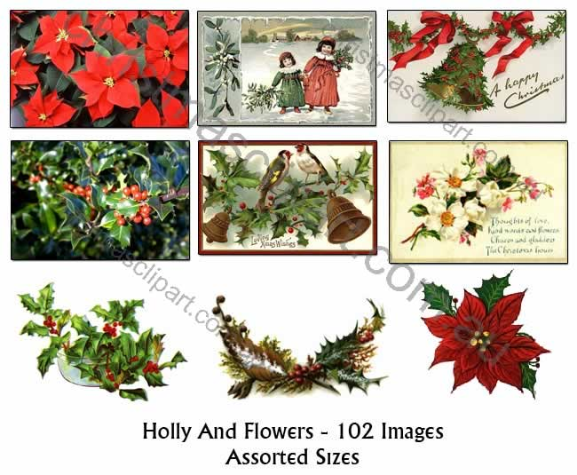holly clipart,vintage holly images,old fashioned christmas holly